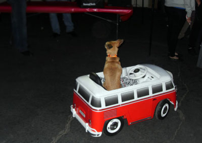Even a dog got into the act at our 2016 VW VIP Car Show.